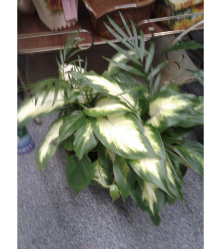 "4"" Combo Plant"