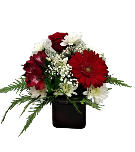 Red and White Wonder