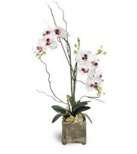 Opulent Orchid and Succulent Garden