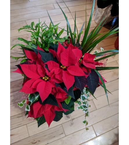 8'' Tropical Poinsetta Christmas Pans