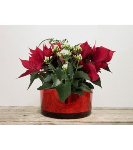 Red glass Christmas planter