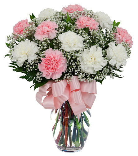 Pretty Carnations 2019