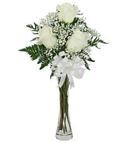 3 White Roses 2019