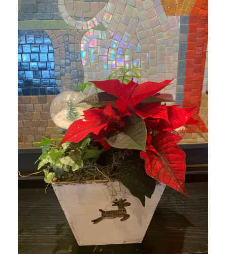 Poinsettia Mix Planter