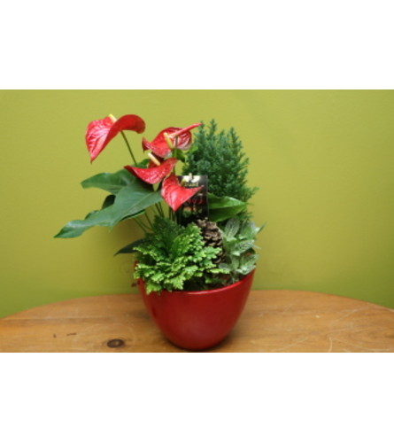 Mixed Planter with Anthurium