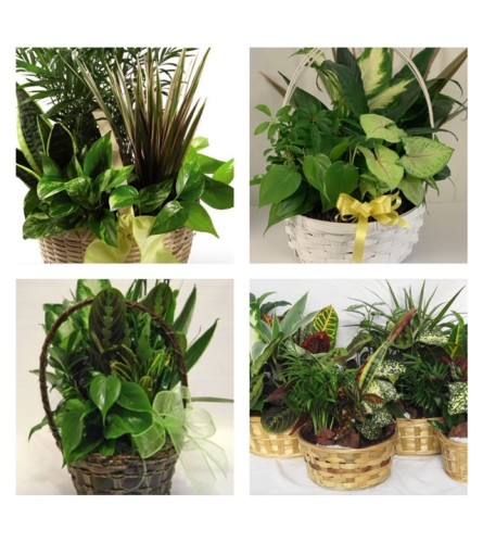 Planter-Florist's Choice in Wicker