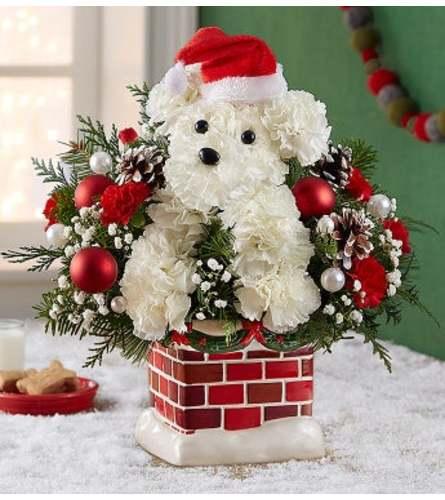 Paws Santa