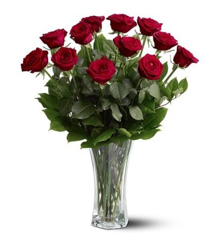 Premium Red Roses 12, 18, 24