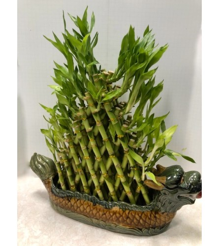 Lucky Bamboo XLarge Planter