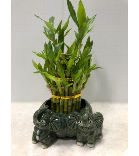 Lucky Bamboo Standing Elephant Planter