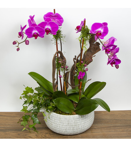 Fuchsia Orchid Combo