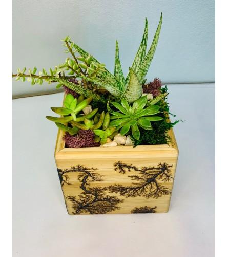 Succulent Garden in Handcrafted Lichtenberg Box