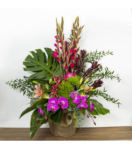 The Hawaiian Tropics