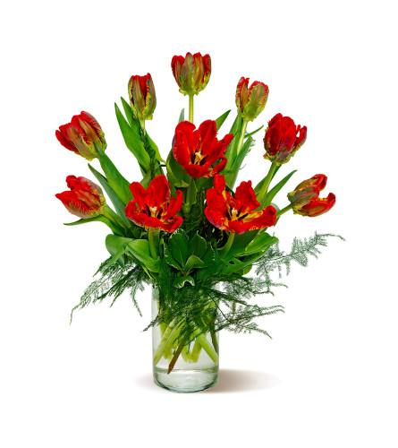 Sadie-Rococo Parrot Tulips