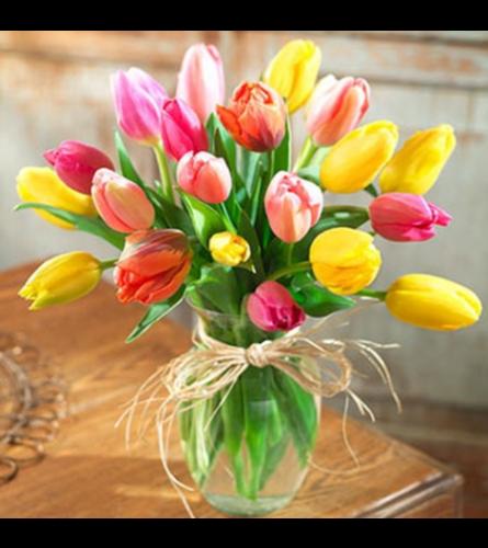 Spring multicolored Tulips