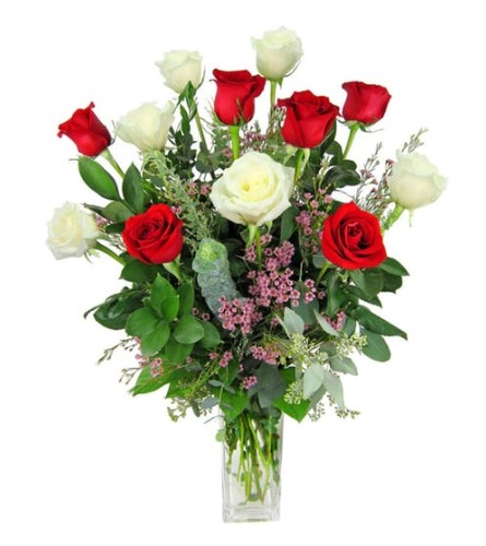 1 Dozen Red/White Roses