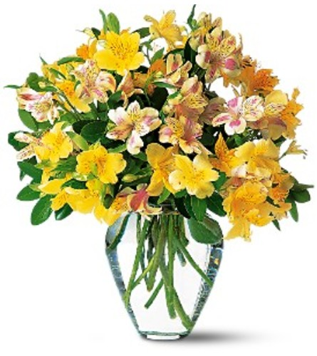 Teleflora Yellow Alstroemeria Vase
