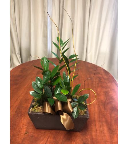 ZZ Planter