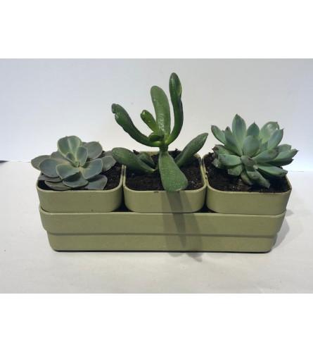 Sunny Succulent Planter