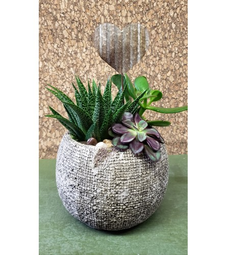 Sweetheart Succulent Bowl