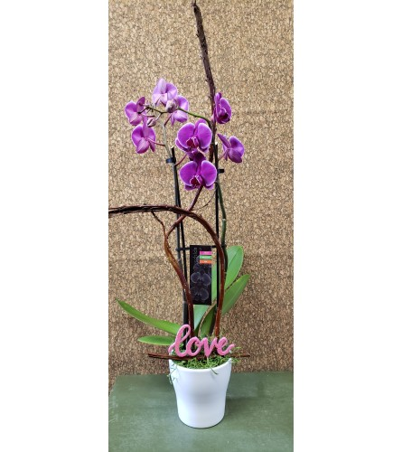 Love Orchid Planter
