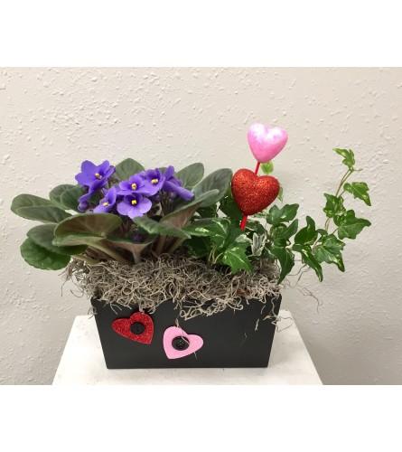 Valentine's Violet Garden