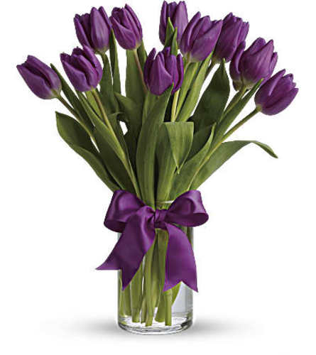 KNOWLES PASSIONATE PURPLE TULIPS