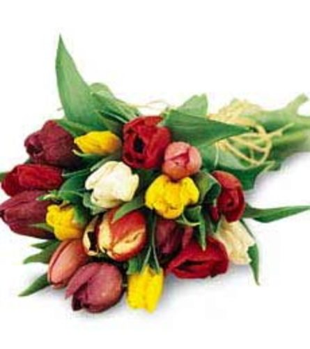 Just Tulips Bouquet