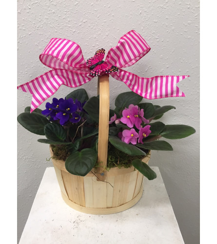 African Violet in Basket