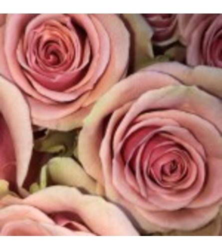 Dozen Pink Roses Designed