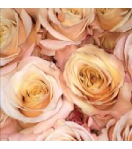 Dozen Pale Peach Roses Designed