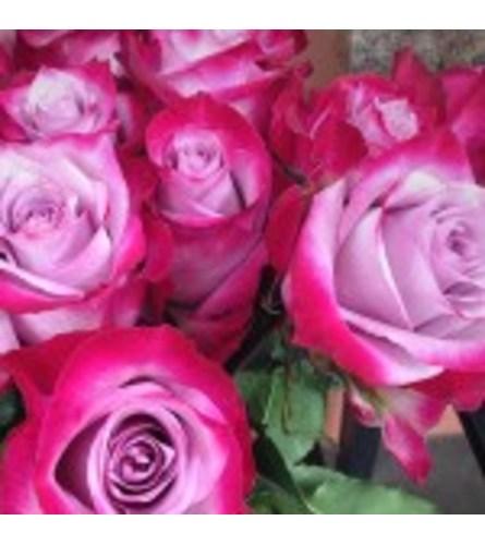 Dozen Lavender Roses Designed