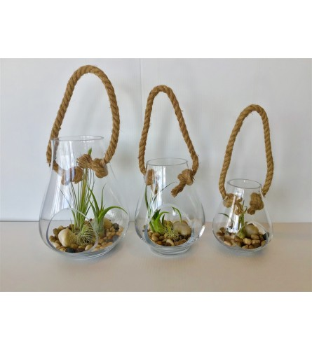 Glass teardrop air plant hanger