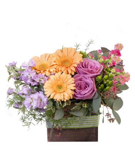FSN - BLOOMING WILD FLOWERS