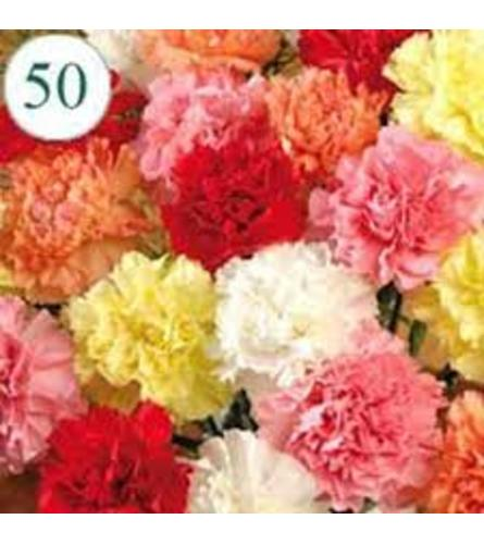 50 to 100 Assorted Carnation