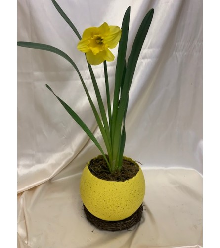 Yellow Daffodil in a Egg Shell container