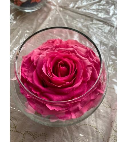 Preservative Rose Pink