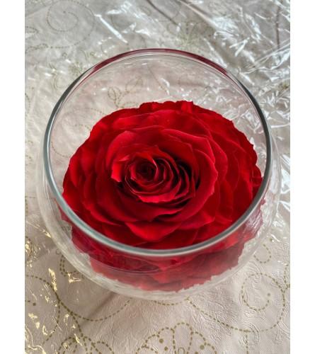 Preservative Rose Red