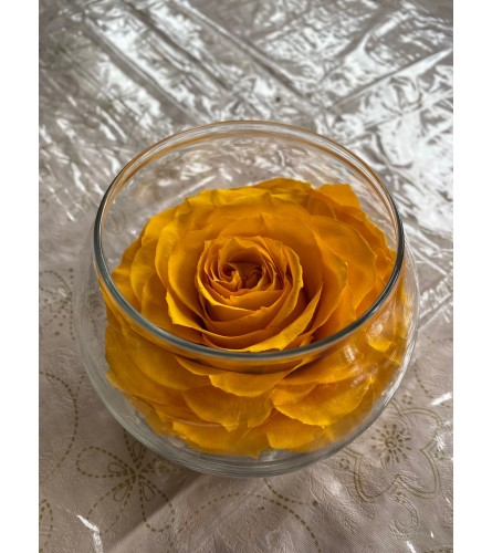 Preservative Rose Yellow