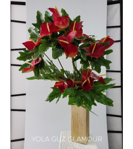 Red Oval Anthurium