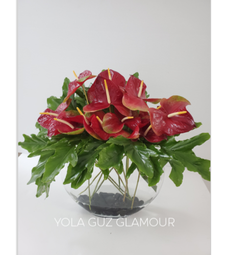 Red Anthurium Low Design