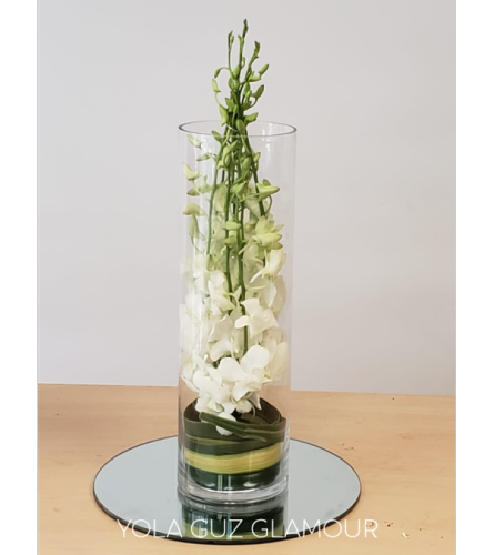 White Orchids in Cylinder