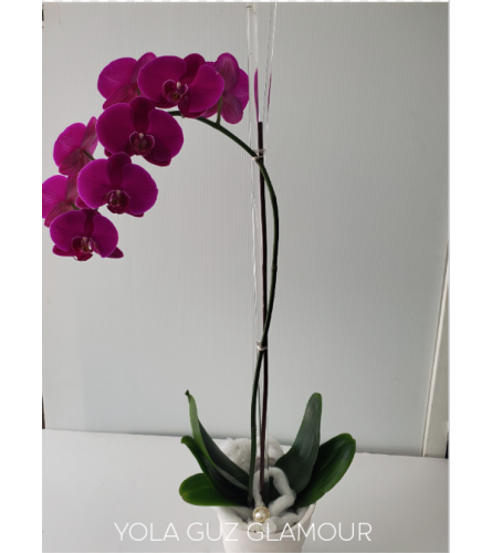 Purple Channel Orchid
