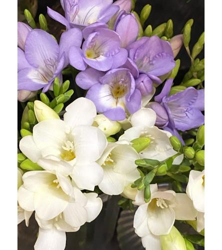 Bouquet of Freesia