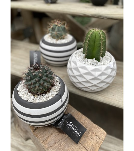 Cactus Planter - small