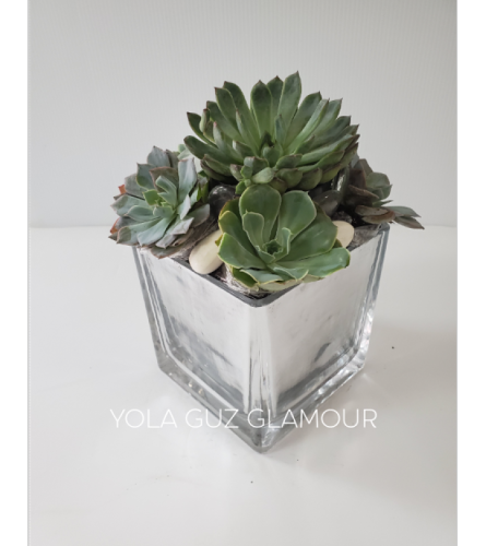 Succulents in Cube