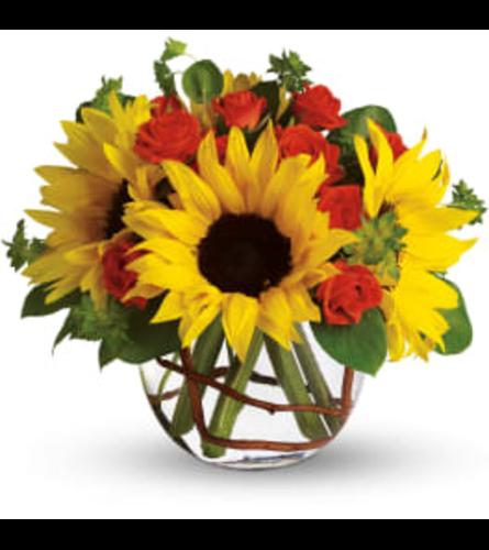 sunflower delight  today
