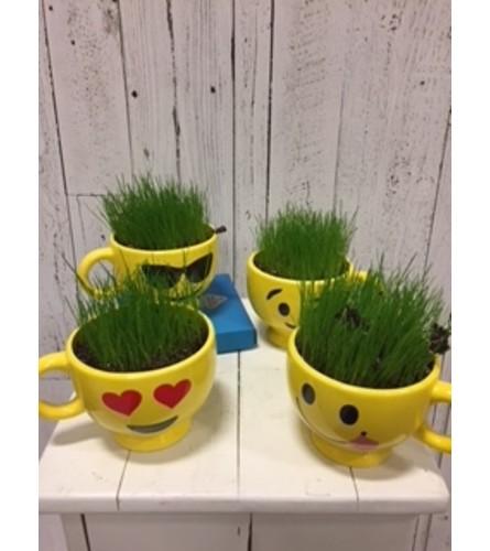 Grow Your Own Hair ( kit)