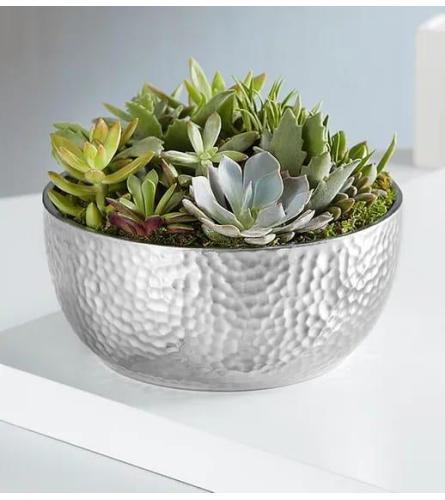 Cacti Garden in silver