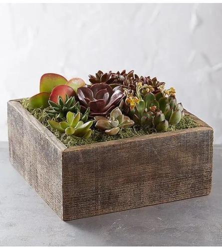 Cacti Garden In Wood